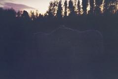 horsecuddle (jenny and flickr) Tags: fuji holga135 fujisuperiareala100