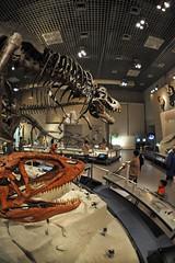 Tokyo 2009 - 上野 -  國立科學博物館 (4)