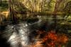 Hillsborough River State Park (jaosehl (Ashleigh)) Tags: statepark color colour water forest river landscape movement rocks florida rapids swirl blackwater hillsboroughriverstatepark tannins floridastateparks diamondclassphotographer flickrdiamond ashleighozment