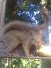 Esquilo 07Fev2010 17h58m48s (Renato Borba) Tags: squirrel esquilo renato borba