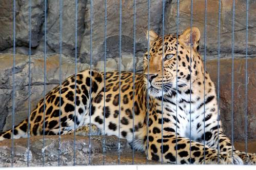 zoo 064