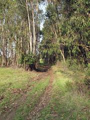 Wildcat Creek Trail 20 (oaktownjohnnyg) Tags: digitalphotograph wildcatcanyon wildcatcreektrail