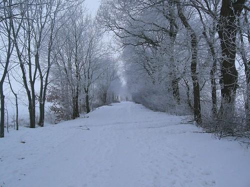 winter 033