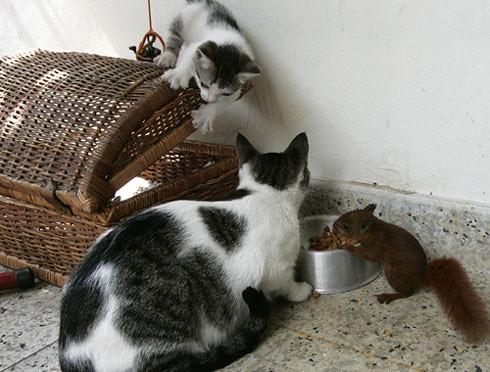 Cat and squirrel (1)