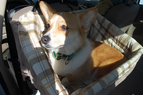 New Car Seat!