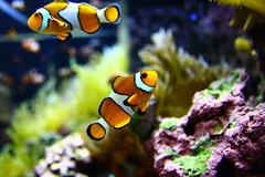 Mystic Aquarium (Kate_Lokteva) Tags: travel orange usa fish unitedstates connecticut newengland ct traveller mystic    ekaterinalokteva photographerekaterinalokteva    ekaterinaloktevaphotographer