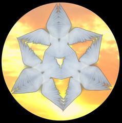 Sacred Dove Mandala