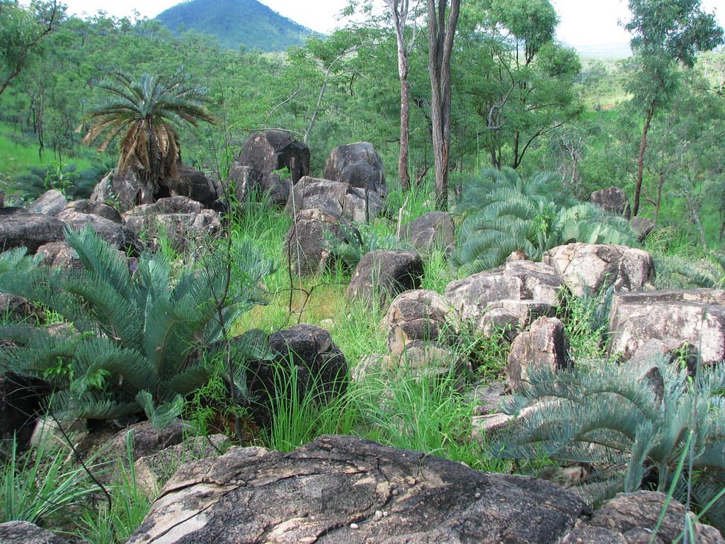 North Queensland bush