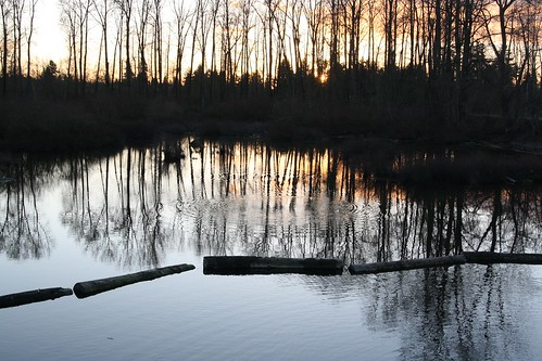 Reflective Pool with Logs