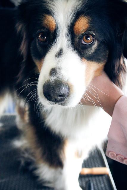 dog #5