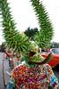 DSC02495 (Ploncito) Tags: santiago dominican republic disfraz carnaval niño lechon caballeros santiagodeloscaballeros robalagallina vejiga