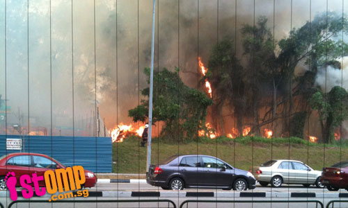 Bushfire the size of a football field rages at Tampines