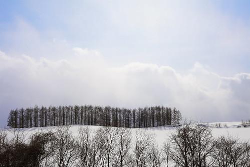 ナマコの林
