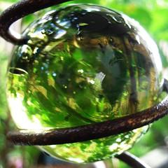 Garden Time (Rantz) Tags: green gimp australia darwin 365 bauble squared day66 northernterritory d90 rantz marblespiral pad2010 padmmx plurkpad2010