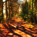 Fairytale Wood