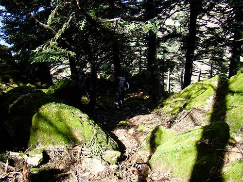 Ruta Sierra Bermeja (8)
