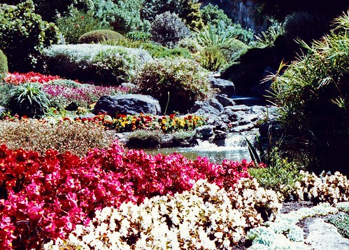 Napier, New Zealand, Centennial Garden, Flowers and rocks
