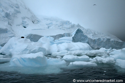 South of the Antarctic Circle in Hanusse Bay