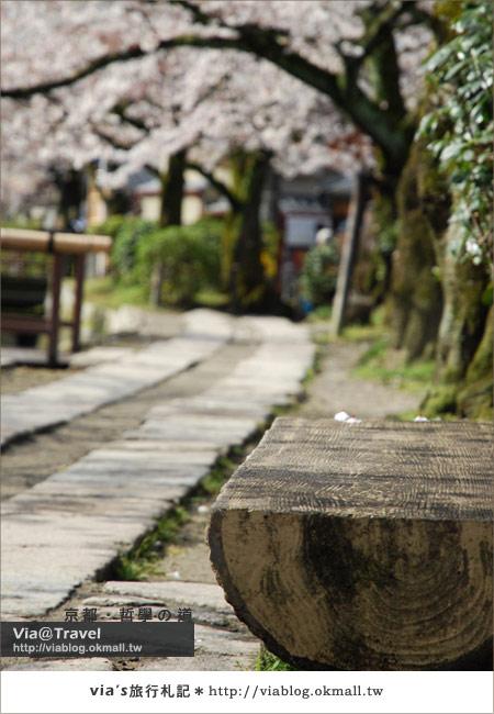 【via關西賞櫻行】京都賞櫻景點~哲學之道19