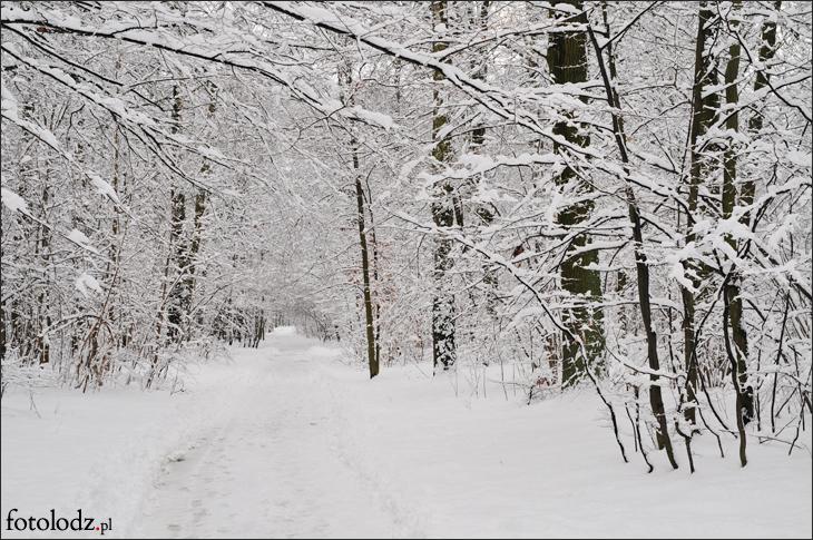 Zima w Parku na Zdrowiu