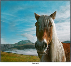 Zaldia eta Anboto (Jabi Artaraz) Tags: espaa horse naturaleza nature beautiful animal fauna caballo amazing spain bravo europa europe gorgeous sony natur natura bilbao zb lovely bizkaia euskalherria euskadi bilbo 1000views animaliak zaldia beautifulearth anboto supershot 100faves 1000vistas euskoflickr fineartphotos fantasticnature abigfave colorphotoaward superaplus aplusphoto flickrbest impressedbeauy diamondclassphotographer flickrdiamond vizvaya excapture jartaraz alfa350 bderechosdeautorauthorscopyrightbjabiartaraz bestofblinkwinners blinksuperstars