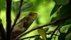 Chameleon...Go Green !!! (MAD_MAVERICK'S_POV) Tags: dpsgreen