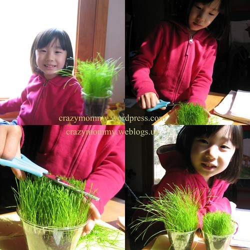 grass growing project