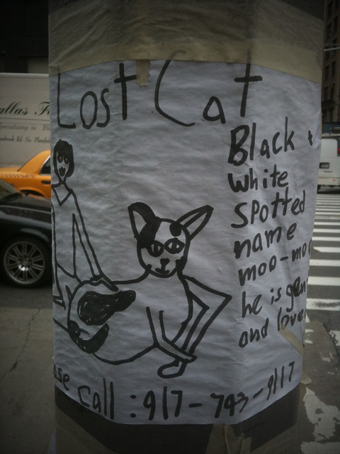lost cat poster #walkingtoworktoday