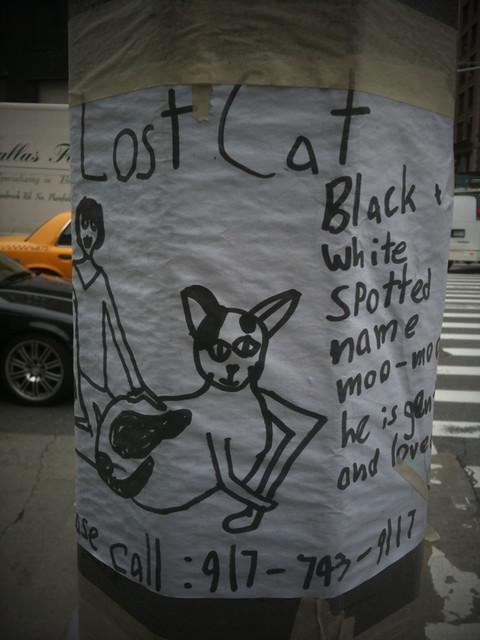 lost cat poster #walkingtoworktoday
