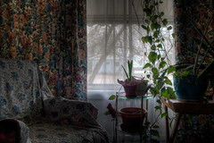 Living Room Window (Billy Wilson Photography) Tags: flowers plants house ontario canada window floral digital canon table eos rebel chair flora interiors antique interior naturallight livingroom indoors xs northern hdr highdynamicrange diffused saultstemarie houseplants northernontario algoma furnature billywilson