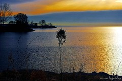 Beauty comes in every form.... (emma lagunday) Tags: sky lake toronto canada silhouette clouds golden lakeontario lakeshoreblvdwest cloudysunrise dailysunriseseries