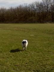 Vdog, running....so cute