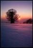 Sunset Dust (grrrrrrrrrrrrrrrrrrrrrrrrrrreg) Tags: blue schnee winter sunset red orange snow tree rot nature sonnenuntergang purple wind natur lila blau baum cmwdred