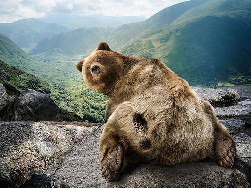Hellloooooo bear!