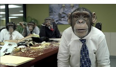 meeting-monkeys