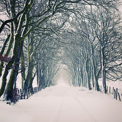 B.S.T. (British Summer Time) (Stuart Stevenson) Tags: road trees winter snow weather canon scotland vanishingpoint branches scottish line avenue twigs tyretracks springsummer blizzards clydevalley galeforcewinds clocksgoforward lastdayofmarch canon5dmkii stuartstevenson startofsummertime 48tharcticsnapoftheyear whatseasonisitanyway