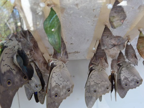 close up of butterflies.