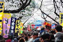 Ueno Park, Sakura (shibuya246) Tags: japan tokyo sakura hanami uenopark