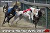 Greyhounds Hildesheim 2010: Grey-480-gem-Finale