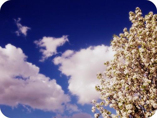 Missouri spring