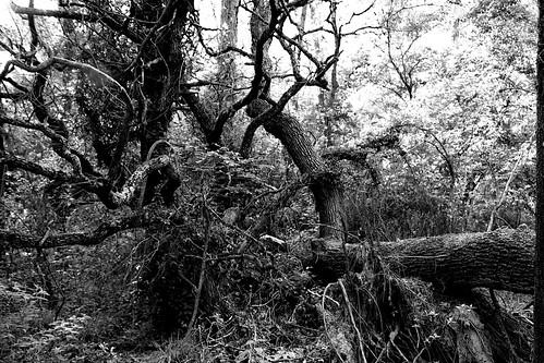 Mangled Trees 1