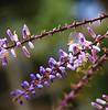webs'n seeds (uteart) Tags: flowers macro bokeh seeds tiny webs utehagen uteart