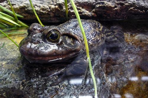 bullfrog John-Morgan