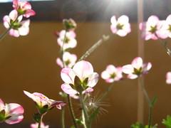 i fiori di serena