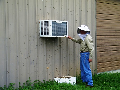 Brushing bees off the AC unit