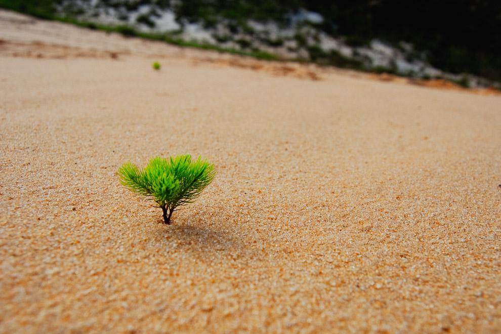 Hierba sobresaliendo en las arenas de las dunas de la zona de Río Verde, esta fue tomada en las dunas del campo de Soaudo. (San Pedro, Paraguay - Elton Núñez)