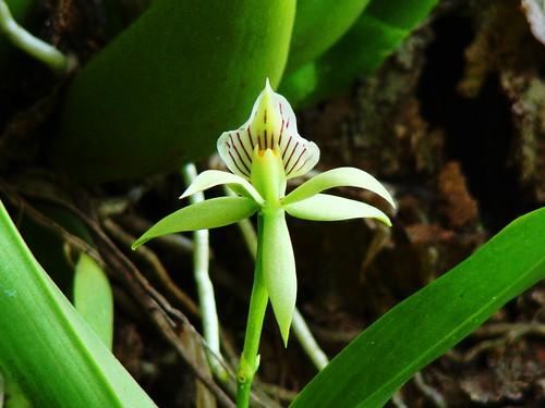 Orquídeas (9)