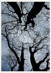 Om natta danser de (frank.nordstrand) Tags: park trees black night embrace eventyr parken trr svart kaldt natta ond skygger trrne hverandre omfavner