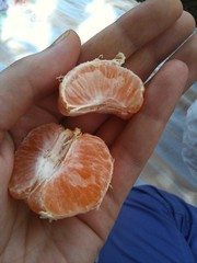 Tangerine fresh from the tree