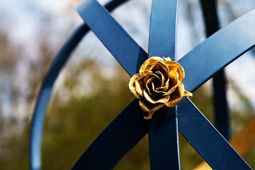 montisfont flower6